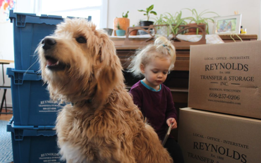 Moving with Pets: Tips for a Stress-Free Move