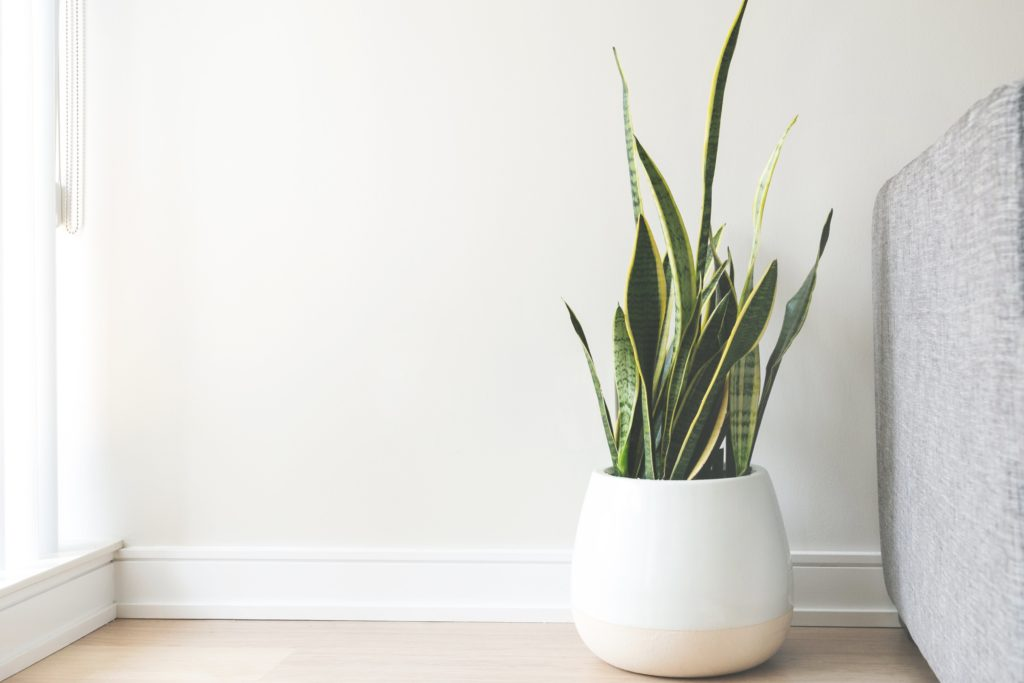 Home staging using plants.
